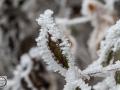 Frozen_Forrest-10