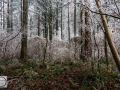 Frozen_Forrest-6 (Kopie)