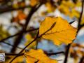 Herbst_2016-11 (Kopie)