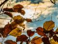 Herbst_2016-12 (Kopie)