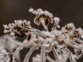 Frozen_Forrest-2
