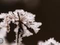 Frozen_Forrest-3