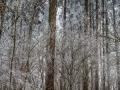 Frozen_Forrest-5 (Kopie)