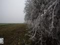 Frozen_Forrest-7