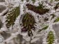 Frozen_Forrest-9
