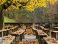 Herbst_2016-10 (Kopie)