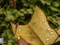 Herbst_2016-4 (Kopie)