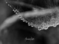 Spinnennetz_Tropfen-1-von-1